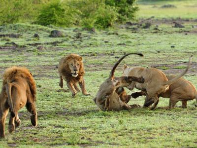 BEST OF KENYA AND TANZANIA