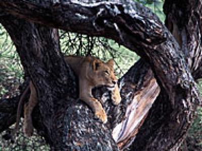 5-Day Highlights Luxury Manyara, Ngorongoro Serengeti