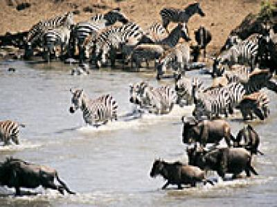 6-Day The Great Wildebeest Migration - July to October