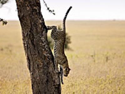 7-Day Tanzania Highlights - Comfort (Private Tour)