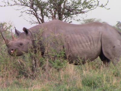 Serengeti and Ngorongoro Crater Highlands Safari -  Absolutely Amazing Safari