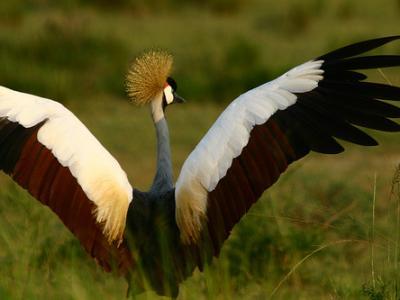 17 DAYS OF FULL BIRDING EXPERIENCE, GORILLA TREKKING AND WILDLIFE SAFARI