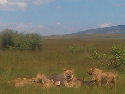 5 Days, 4 Nights  Economy Wildlife Safari