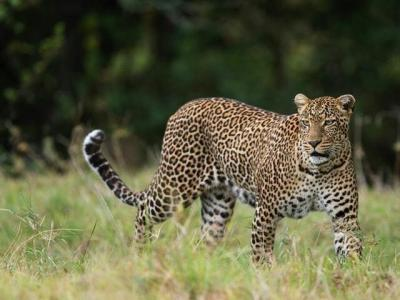 3 Days Maaasi Mara Economy Safari