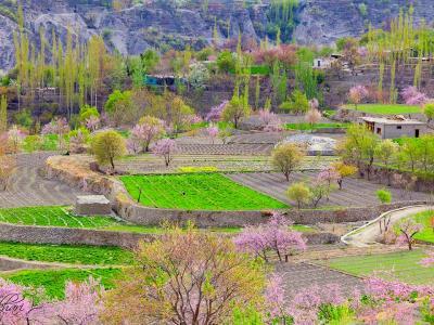 Hunza Spring/Blossom Tour